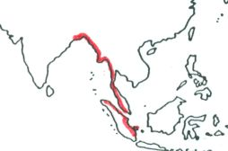 Mangrove Pitta map