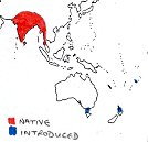 Red-vented Bulbul map
