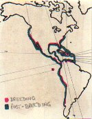 Brown Pelican map