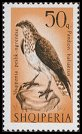Cl: Osprey (Pandion haliaetus) <<Shqiponja peshk-ngrenese>>  SG 1088 (1966) 180 [3/6]
