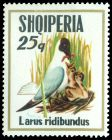 Cl: Black-headed Gull (Larus ridibundus) SG 1589 (1973) 55