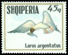 Cl: Great Black-headed Gull (Larus ichthyaetus)(Out of range)  SG 1590 (1973) 110
