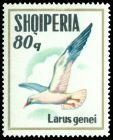 Cl: Slender-billed Gull (Larus genei) SG 1591 (1973) 220