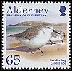 Cl: Sanderling (Calidris alba) SG 264 (2005) 300 [3/58]