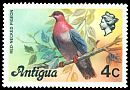 Cl: Scaly-naped Pigeon (Patagioenas squamosa) <<Red-necked Pigeon>>  SG 473 (1976) 140