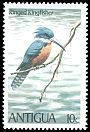Cl: Ringed Kingfisher (Ceryle torquatus) SG 666 (1980) 70