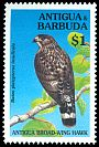Cl: Broad-winged Hawk (Buteo platypterus insulicola) SG 2054 (1994) 140