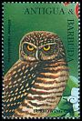 Cl: Burrowing Owl (Athene cunicularia)(Out of range)  SG 2149 (1995) 110