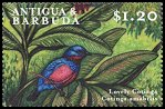 Cl: Lovely Cotinga (Cotinga amabilis)(Out of range)  SG 2986 (2000) 75