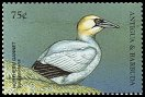 Cl: Northern Gannet (Morus bassanus)(Out of range)  SG 2763 (1998) 65