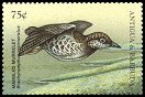 Cl: Marbled Murrelet (Brachyramphus marmoratus)(Out of range)  SG 2762 (1998) 65