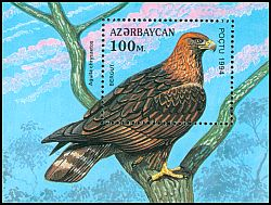 Cl: Golden Eagle (Aquila chrysaetos) <<BERGUT>>  SG 194 (1994) 160