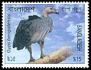 Cl: White-rumped Vulture (Gyps bengalensis) SG 1101 (2012)  [10/24]