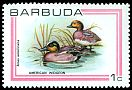 Cl: American Wigeon (Anas americana) SG 503 (1980) 70
