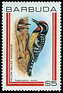 Cl: Yellow-bellied Sapsucker (Sphyrapicus varius)(Out of range)  SG 518 (1980) 350