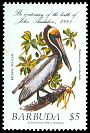 Cl: Brown Pelican (Pelecanus occidentalis) SG 786 (1985) 100