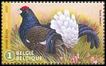 Cl: Black Grouse (Tetrao tetrix) new (2017)  [11/37]
