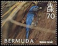 Cl: Eastern Bluebird (Sialia sialis)(Repeat for this country)  SG 963 (2005) 150 [5/2]