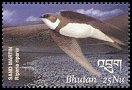 Cl: Bank Swallow (Riparia riparia) SG 1731b2 (2002)  [5/59]