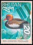 Cl: Red-crested Pochard (Netta rufina) SG 1508 (1999) 90
