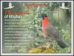 Cl: Satyr Tragopan (Tragopan satyra)(Endemic or near-endemic)  new (2017)  [11/36]
