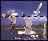 Cl: Caspian Gull (Larus cachinnans)(Out of range)  SG 1731b1 (2002)  [5/59]