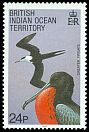 Cl: Great Frigatebird (Fregata minor) SG 92 (1990) 140