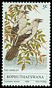 Cl: Southern Pied-Babbler (Turdoides bicolor) SG 60 (1980) 15