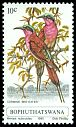 Cl: Southern Carmine Bee-eater (Merops nubicoides) SG 61 (1980) 20