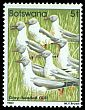 Cl: Grey-headed Gull (Larus cirrocephalus) SG 519 (1982) 100