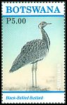 Cl: Black-bellied Bustard (Lissotis melanogaster) new (2017)  [11/30]