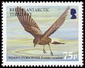 Cl: Wilson's Storm-Petrel (Oceanites oceanicus)(Repeat for this country)  SG 397 (2005) 400 [3/38]
