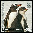 Cl: Gentoo Penguin (Pygoscelis papua)(Repeat for this country) (I do not have this stamp)  SG 559 (2011)  [7/41]
