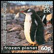 Cl: Gentoo Penguin (Pygoscelis papua)(Repeat for this country) (I do not have this stamp)  SG 563 (2011)  [7/41]