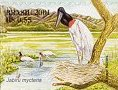Cl: Jabiru (Jabiru mycteria)(Repeat for this country)  SG 3261 (2001) 120