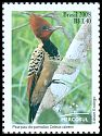 Cl: Rufous-headed Woodpecker (Celeus spectabilis obrieni) <<Pica-pau-do-parnaiba>>  SG 3558 (2008) 220 [4/59]
