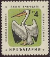 Cl: Dalmatian Pelican (Pelecanus crispus)(Repeat for this country)  SG 1237 (1961) 30