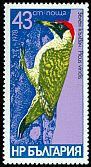 Cl: Green Woodpecker (Picus viridis) SG 2685 (1979) 375