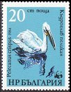 Cl: Dalmatian Pelican (Pelecanus crispus)(Repeat for this country)  SG 3185 (1984) 140