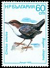 Cl: White-throated Dipper (Cinclus cinclus) SG 3471 (1987) 140