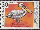 Cl: Great White Pelican (Pelecanus onocrotalus)(Repeat for this country)  SG 3522 (1988) 65