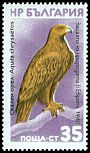 Cl: Golden Eagle (Aquila chrysaetos)(not catalogued)  (1980)