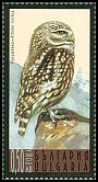 Cl: Little Owl (Athene noctua) SG 4735 (2009) 140 [6/13]