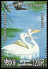Cl: Spot-billed Pelican (Pelecanus philippensis) new (2005)  [5/12]