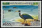 Cl: White-shouldered Ibis (Pseudibis davisoni) new (2006)  [5/44]