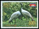 Cl: Demoiselle Crane (Anthropoides virgo) new (2020)  [12/24]