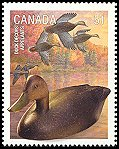 Cl: American Black Duck (Anas rubripes) SG 2411 (2006) 110 [5/31]