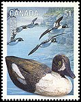 Cl: Barrow's Goldeneye (Bucephala islandica) SG 2409 (2006) 110 [5/31]