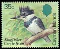 Cl: Belted Kingfisher (Ceryle alcyon) SG 594 (1984) 325