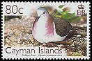 Cl: Caribbean Dove (Leptotila jamaicensis collaris)(Endemic or near-endemic)  SG 1111 (2006) 175 [5/38]